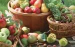 Как и чем снимать плоды фруктов с деревьев?